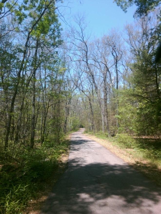 Massachusetts Dept  of Conservation & Recreation: Bristol Lot Timber