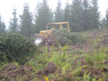 Norway spruce (left onsite to provide coarse woody debris), and deep ripping compacted soils.