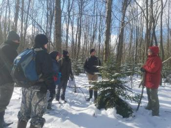 Field staff surround a small red spruce tree