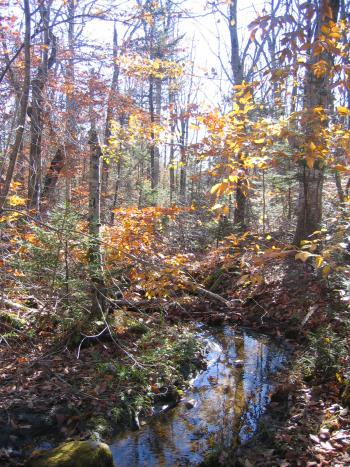 Fall at Notchview Reservation. Photo courtesy Julie Richburg.
