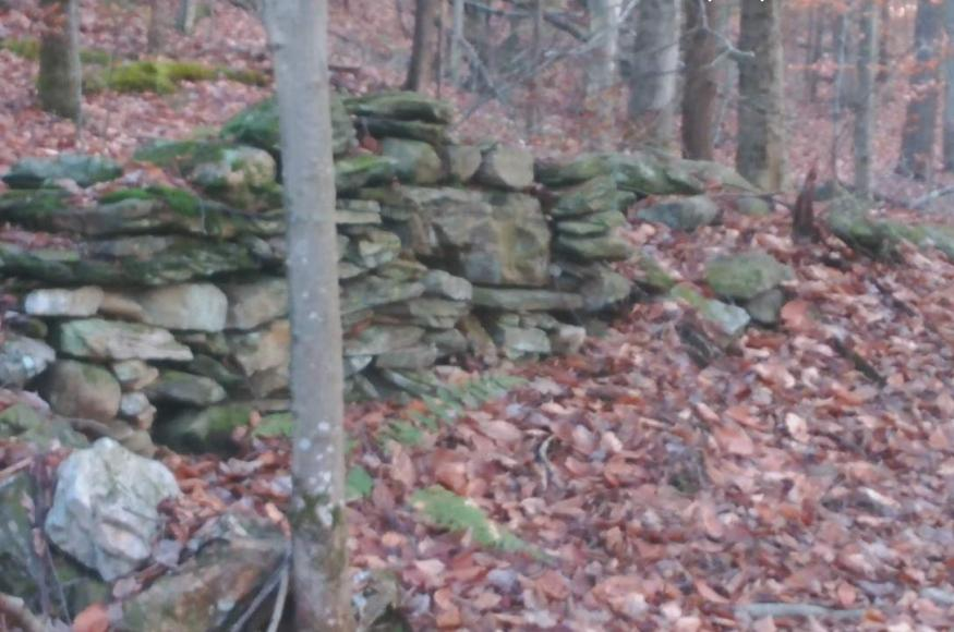 an old stone wall in a forest