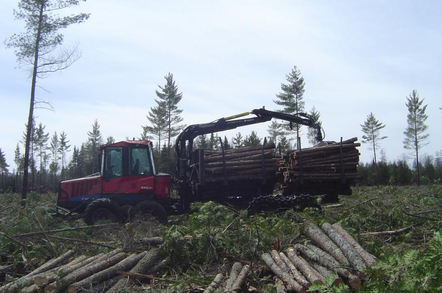 Harvest operations in one of Warren's lowland conifer stands.