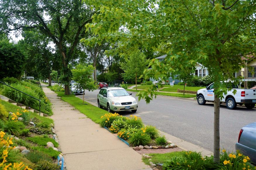 Trees planted along a boulevard in south Minneapolis
