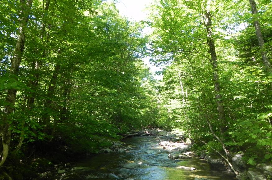 a forest stream with trees on both sides