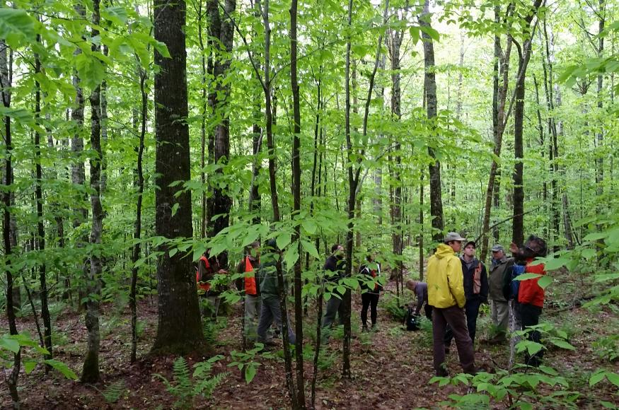 People standing in a northern hardwood forest