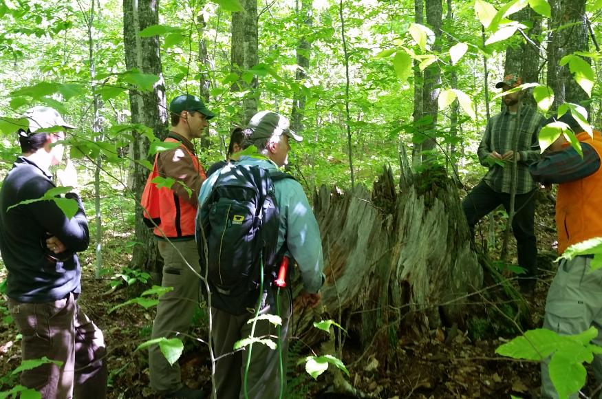 Six people talk in the forest while standing around a large, partially-decomposed tree stump.