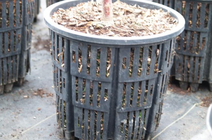 Photo of one grow pot