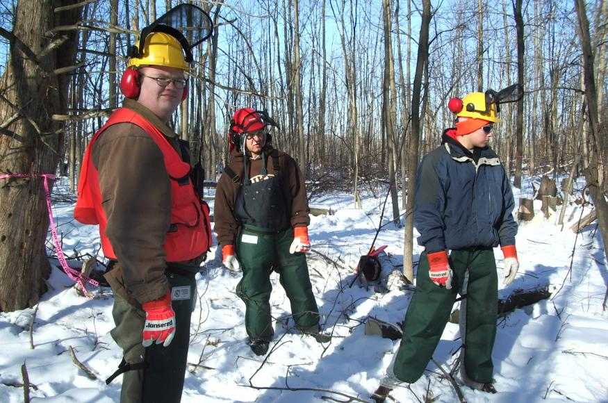crew of workers cutting ash trees in winter