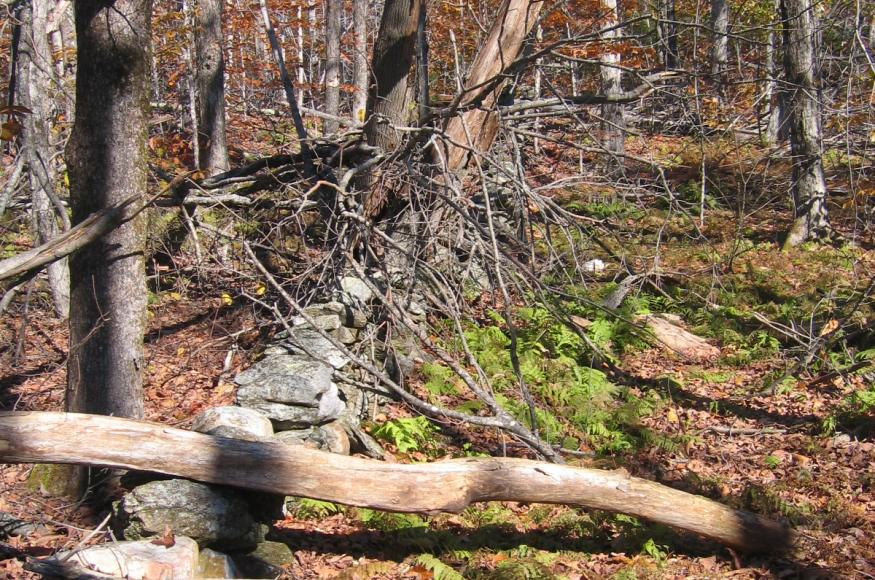 An old and abandoned stone wall visible under forest debris.
