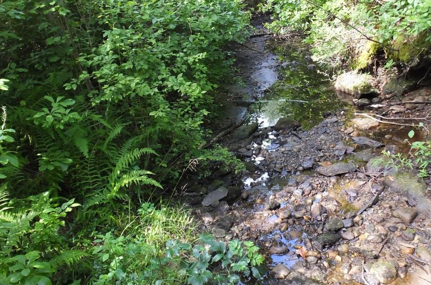 A small creek under relatively dry conditions, surrounded by invasive species