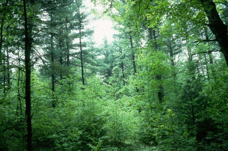 A forest containing trees of various sizes and species.