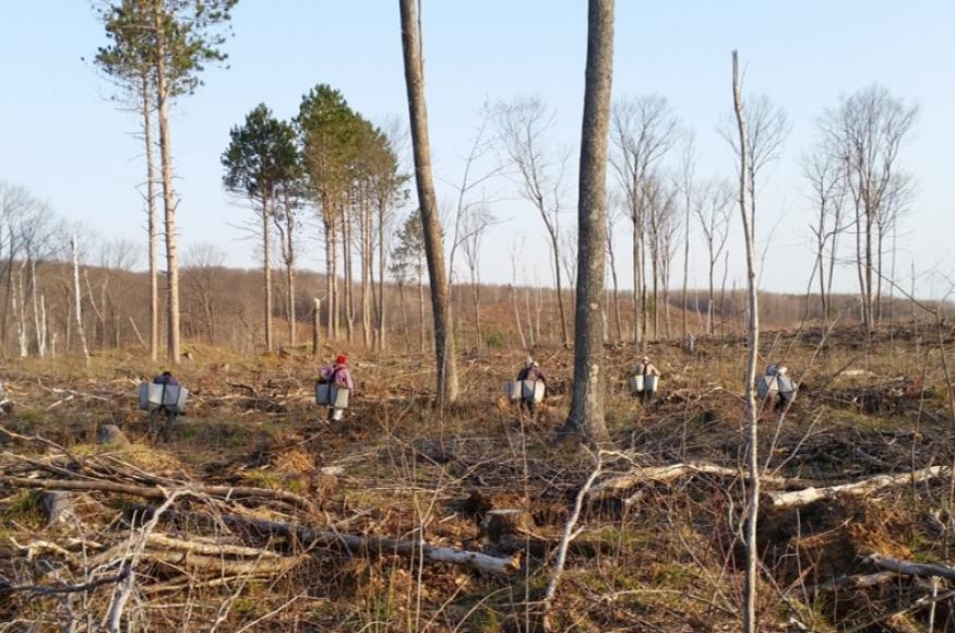 A planting crew planted 435,000 tree seedlings for this project.