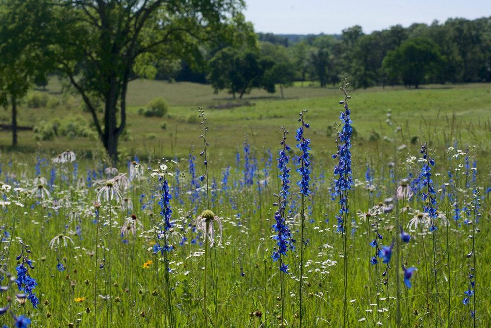 SE grasslands